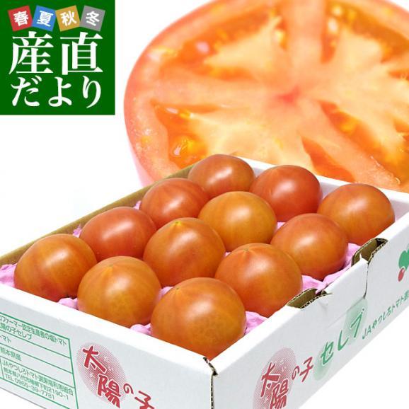 熊本県より産地直送 JAやつしろ 太陽の子セレブ フルーツトマト 約1キロ MからSサイズ(11玉から16玉) とまと 送料無料01