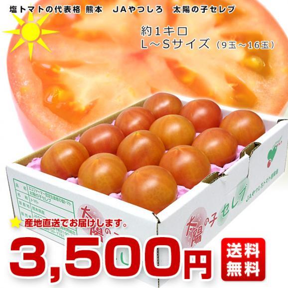熊本県より産地直送 JAやつしろ 太陽の子セレブ フルーツトマト 約1キロ MからSサイズ(11玉から16玉) とまと 送料無料03