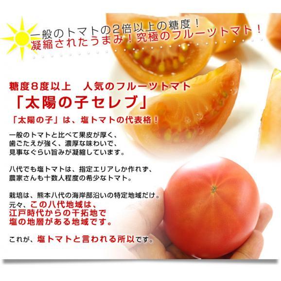熊本県より産地直送 JAやつしろ 太陽の子セレブ フルーツトマト 約1キロ MからSサイズ(11玉から16玉) とまと 送料無料04
