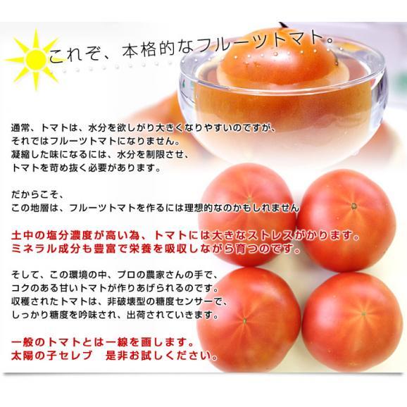 熊本県より産地直送 JAやつしろ 太陽の子セレブ フルーツトマト 約1キロ MからSサイズ(11玉から16玉) とまと 送料無料05