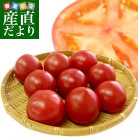 送料無料 熊本県より産地直送 JAやつしろ 太陽の子セレブ フルーツトマト 約1キロ Lサイズ(9玉) とまと