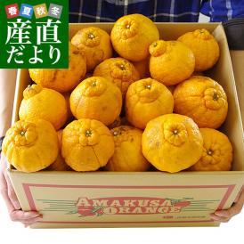 熊本県より産地直送 JAあまくさ 訳あり熊本しらぬひ 大小込 10キロ 不知火 しらぬい 柑橘 オレンジ 天草 送料無料