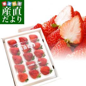 送料無料 新潟県より産地直送 JA北越後 越後姫(えちごひめ) 450から480g(12から15粒入り) ゆりカーゴタイプ イチゴ 苺 いちご