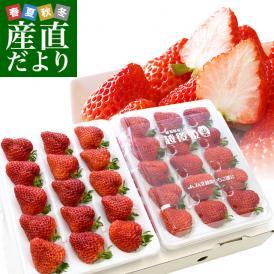 送料無料 新潟県より産地直送 JA北越後 越後姫(えちごひめ) 900から960g (450から480g(12から15粒入り)×2パック) ゆりカーゴタイプ イチゴ 苺 いちご