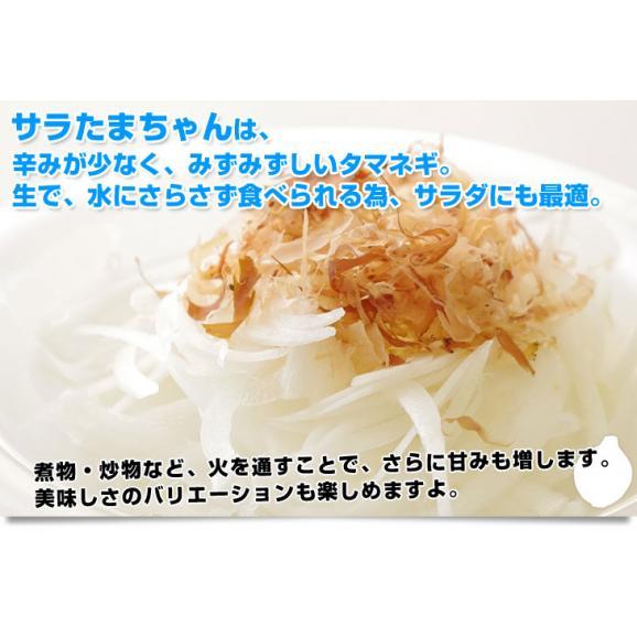 熊本県より産地直送 JAあしきた サラたまちゃん LAサイズ 約5キロ (15玉前後) 送料無料 玉葱 タマネギ サラ玉 さらたま さらタマ04