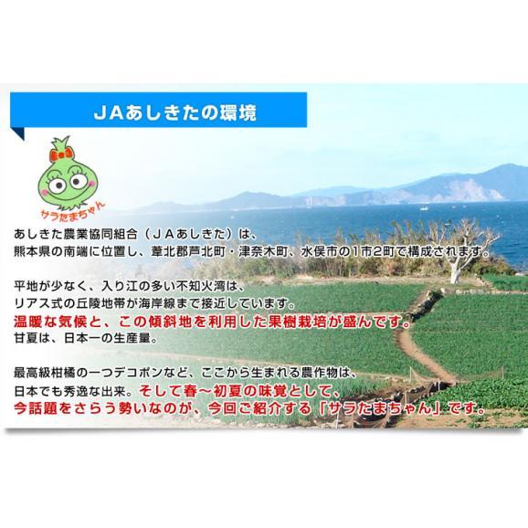 熊本県より産地直送 JAあしきた サラたまちゃん LAサイズ 約5キロ (15玉前後) 送料無料 玉葱 タマネギ サラ玉 さらたま さらタマ05