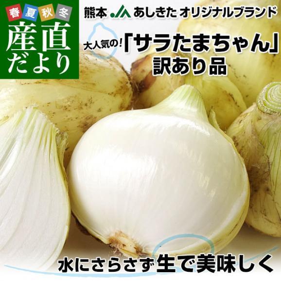 熊本県より産地直送 JAあしきた サラたまちゃん 規格外 (訳あり品) 約10キロ  送料無料 玉葱 タマネギ サラ玉 さらたま さらタマ02