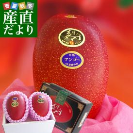 希少な太陽のタマゴをお届け!圧巻の存在感!最上級の宮崎マンゴーです。