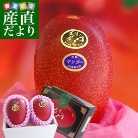 旬の最盛期に お届けします!最上級の宮崎マンゴー・圧巻の存在感!
