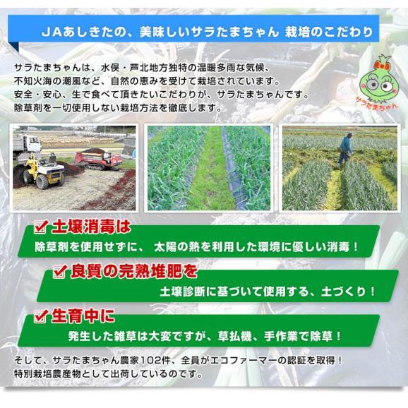 熊本県より産地直送 JAあしきた サラたまちゃん 規格外 (訳あり品) 約5キロ 送料無料 玉葱 タマネギ サラ玉 さらたま さらタマ06