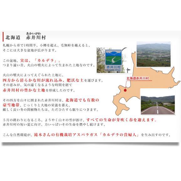 北海道より産地直送 赤井川村滝本農場の有機JASグリーンアスパラ「カルデラの貴公子」 LからMサイズ 約500g入り 送料無料 アスパラガス ※クール便発送04