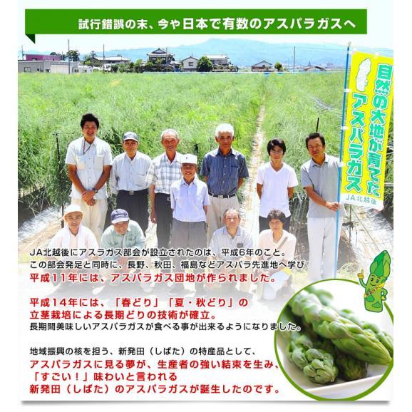 新潟県より産地直送 JA北越後 極太グリーンアスパラ 2L 約1キロ 送料無料04