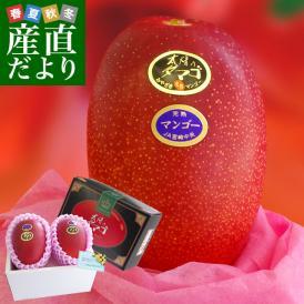 父の日ギフト 宮崎県より産地直送 JA宮崎中央 完熟マンゴー 太陽のタマゴ 2L×2玉 父の日プレゼント