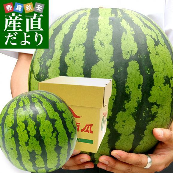 北海道より産地直送 JAきょうわ らいでんスイカ 超特大 優品5Lサイズ 10キロ以上 すいか 西瓜 送料無料01