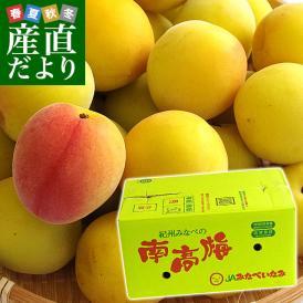 送料無料 和歌山県産 JA紀州 みなべの南高梅  3Lサイズ 10キロ 市場発送