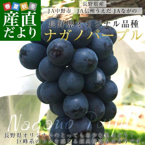 長野県産 ナガノパープル 合計1.2キロ(2房から3房) ぶどう 葡萄 送料無料 ※クール便02