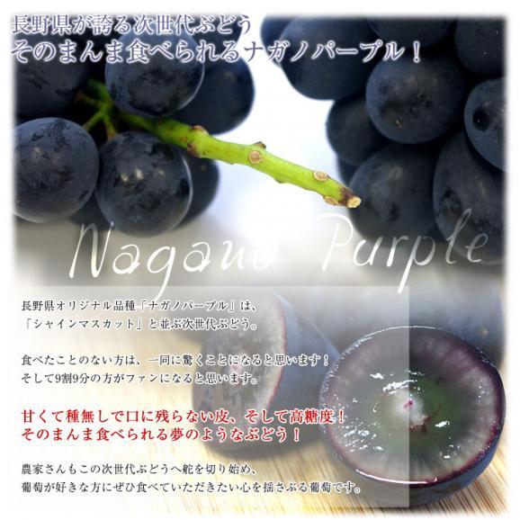 長野県産 ナガノパープル 合計1.2キロ(2房から3房) ぶどう 葡萄 送料無料 ※クール便05