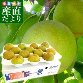 熊本県より産地直送 JA熊本果実連 秋麗梨 (しゅうれいなし) 5キロ (14玉から16玉) ナシ なし 送料無料