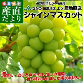 長野県より産地直送 JAながの(須高地区)シャインマスカット 約2キロ 3から4房