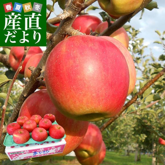 青森県より産地直送 JAつがる弘前 夢ひかり 3キロ(9玉から13玉) 林檎 リンゴ りんご 送料無料01