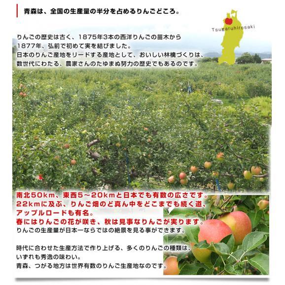 青森県より産地直送 JAつがる弘前 夢ひかり 3キロ(9玉から13玉) 林檎 リンゴ りんご 送料無料04