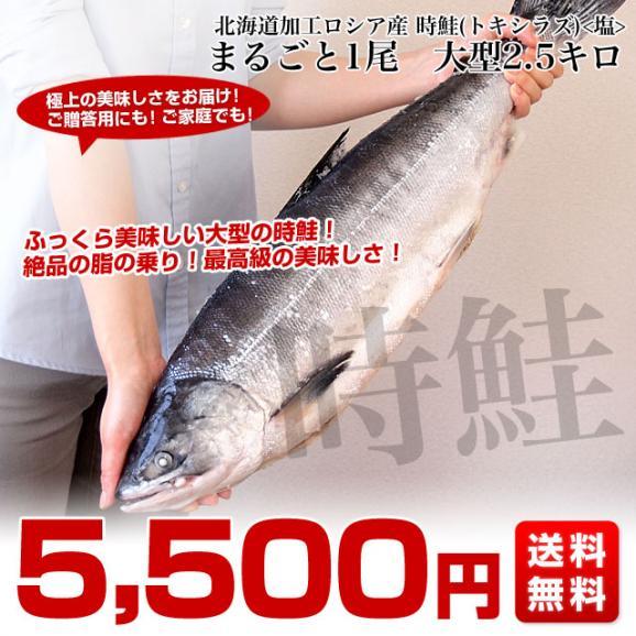 送料無料 北海道から直送  北海道加工  時鮭(トキシラズ) まるごと1尾 大型2.5キロ (ロシア産) ときさけ トキサケ03