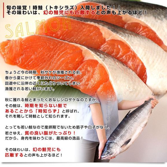 送料無料 北海道から直送  北海道加工  時鮭(トキシラズ) まるごと1尾 大型2.5キロ (ロシア産) ときさけ トキサケ04