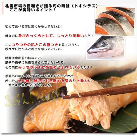 送料無料 北海道から直送  北海道加工  時鮭(トキシラズ) まるごと1尾 大型2.5キロ (ロシア産) ときさけ トキサケ06