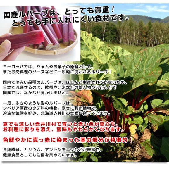 送料無料 北海道産 有機JAS認証の滝本農場 真っ赤なルバーブ 約800g るばーぶ ルバーブ04