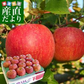 送料無料 岩手県より産地直送 JAいわて中央 皮ごとまるごと!特別栽培りんご 5キロ (14玉から23玉) 林檎 リンゴ お歳暮