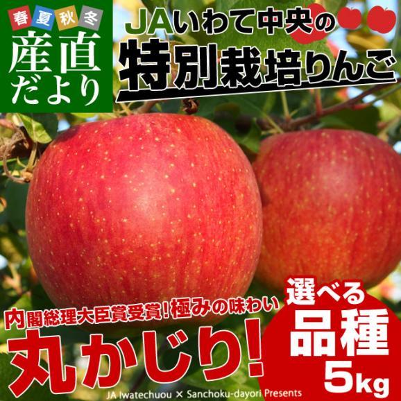 岩手県より産地直送 JAいわて中央 皮ごとまるごと!特別栽培りんご 5キロ (14玉から25玉) 林檎 リンゴ 送料無料02