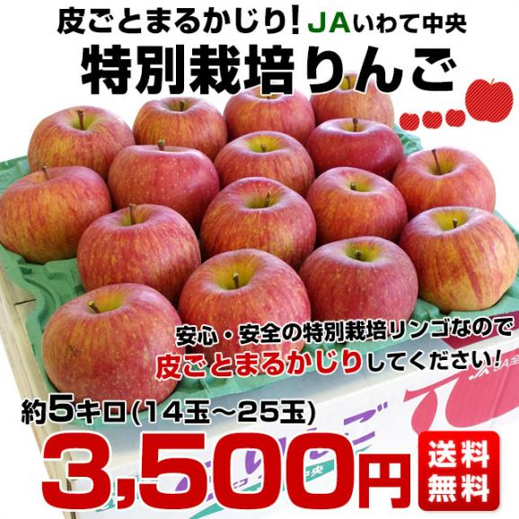 岩手県より産地直送 JAいわて中央 皮ごとまるごと!特別栽培りんご 5キロ (14玉から25玉) 林檎 リンゴ 送料無料 御歳暮 お歳暮 ギフト03