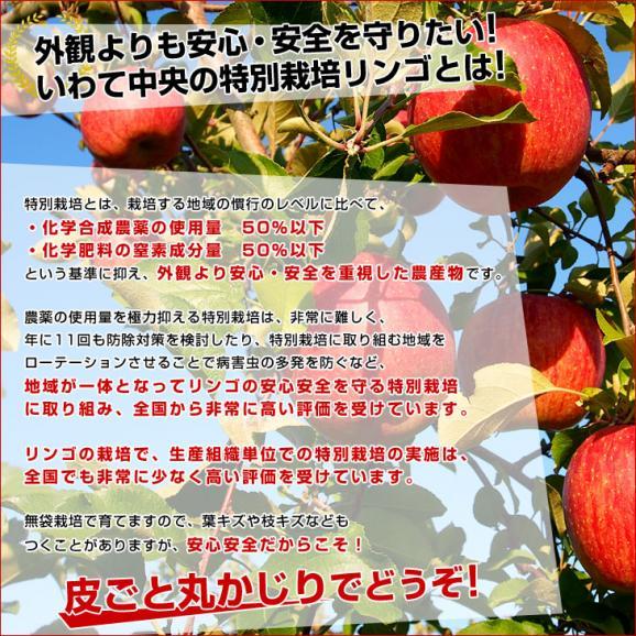 岩手県より産地直送 JAいわて中央 皮ごとまるごと!特別栽培りんご 5キロ (14玉から25玉) 林檎 リンゴ 送料無料04