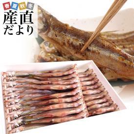 送料無料 北海道産 本ししゃも 肉厚なオス 30尾入り化粧箱 柳葉魚 本シシャモ