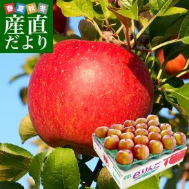 岩手県より産地直送 JAいわて中央 葉とらずサンふじりんご 葉ップル 5キロ(14玉から20玉) 林
