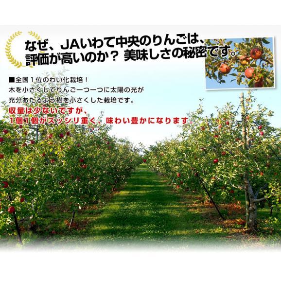 送料無料 岩手県より産地直送 JAいわて中央 完熟サンふじりんご じゅくりん 5キロ(16玉から23玉) 林檎 リンゴ お歳暮 御歳暮05
