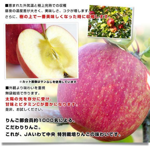 送料無料 岩手県より産地直送 JAいわて中央 完熟サンふじりんご じゅくりん 5キロ(16玉から23玉) 林檎 リンゴ お歳暮 御歳暮06