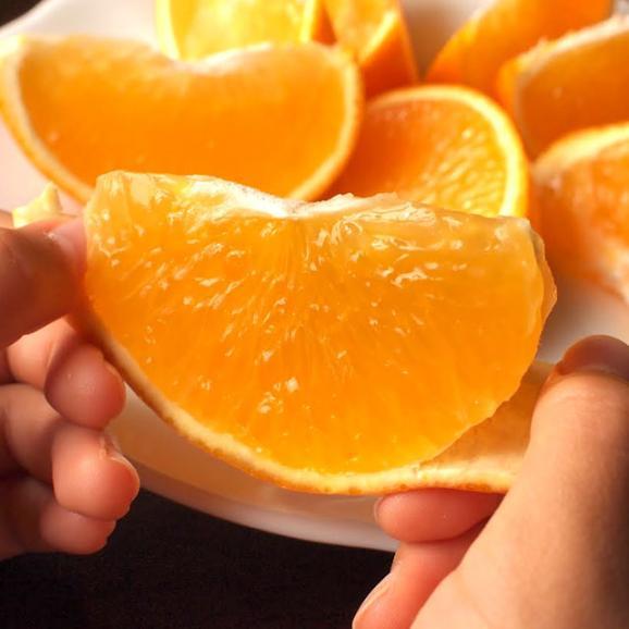 送料無料 愛媛県より産地直送 JAえひめ中央 紅まどんな 良品 3LからLサイズ 約3キロ(10玉から15玉) オレンジ 冬ギフト 御歳暮04