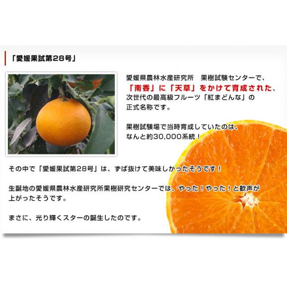 送料無料 愛媛県より産地直送 JAえひめ中央 紅まどんな 良品 3LからLサイズ 約3キロ(10玉から15玉) オレンジ 冬ギフト 御歳暮05