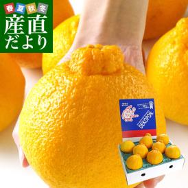 熊本県より産地直送 JAあしきた ハウス栽培 大玉デコポン (良品) 3キロ(7玉から8玉) 送料無料 でこぽん デコぽん 芦北 葦北