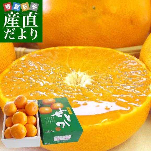 佐賀県より産地直送 JAからつ せとか 秀品 2.5キロ 化粧箱入(12から15玉) 送料無料 唐津01