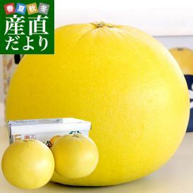 熊本県より産地直送 JAやつしろ 晩白柚 超大玉 2玉入り 4キロから5キロ 送料無料 ばんぺいゆ 最大級 柑橘 八代
