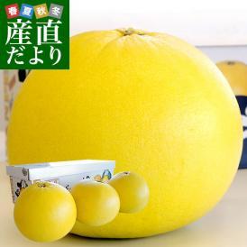 熊本県より産地直送 JAやつしろ 晩白柚 大玉 3玉入り 4キロから5キロ 送料無料 ばんぺいゆ 最大級 柑橘 八代