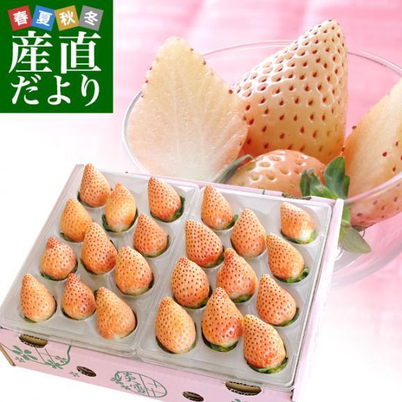 熊本県より産地直送 西谷農園の白いちご 淡雪(あわゆき) Lサイズ以上 約540g(270g×2P(8粒から15粒×2P))苺 イチゴ 送料無料01