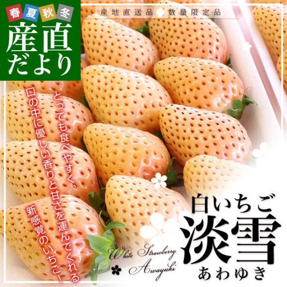 熊本県より産地直送 西谷農園の白いちご 淡雪(あわゆき) Lサイズ以上 約540g(270g×2P(8粒から15粒×2P))苺 イチゴ 送料無料02