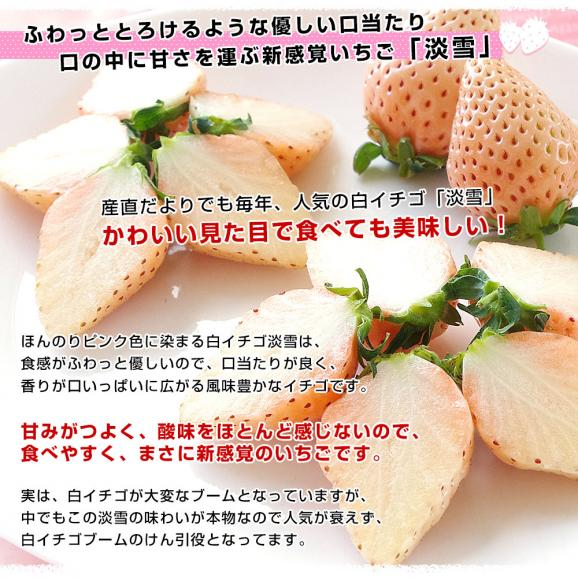 熊本県より産地直送 西谷農園の白いちご 淡雪(あわゆき) Lサイズ以上 約540g(270g×2P(8粒から15粒×2P))苺 イチゴ 送料無料04