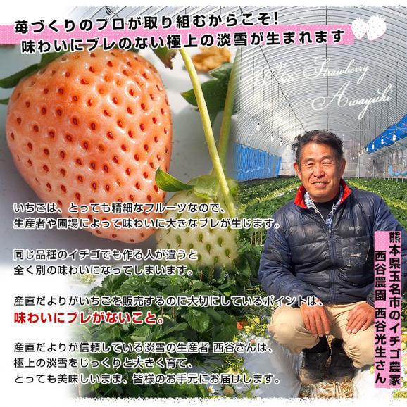 熊本県より産地直送 西谷農園の白いちご 淡雪(あわゆき) Lサイズ以上 約540g(270g×2P(8粒から15粒×2P))苺 イチゴ 送料無料05