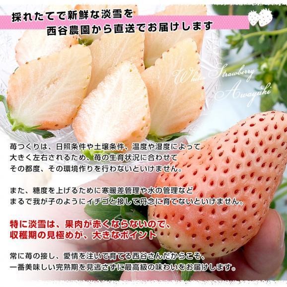 熊本県より産地直送 西谷農園の白いちご 淡雪(あわゆき) Lサイズ以上 約540g(270g×2P(8粒から15粒×2P))苺 イチゴ 送料無料06