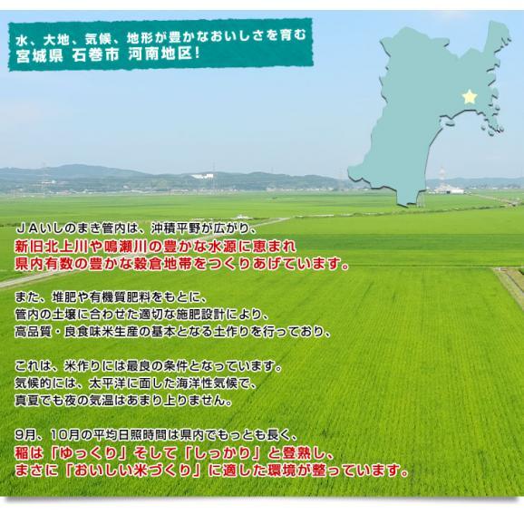 令和元年産 宮城県産 JAいしのまき 河南地区 ササニシキ 10キロ(5キロ×2袋) お米 宮城県米05