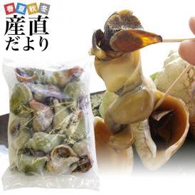 送料無料 北海道産 青つぶ 焼きつぶ用(あぶら処理済み・ボイル)Lから2Lサイズ 約1キロ(8から15個入り)
